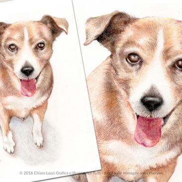 Ritratti di cani, gatti e altri animali